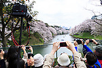 Visitors take pictures of the cherry blossoms in full bloom at Chidorigafuchi on April 1, 2016, Tokyo, Japan. On Thursday, the Japan Meteorological Agency announced that Tokyo's cherry trees were in full bloom, three days earlier than usual, but two days later than last year. Chidorigafuchi is one of the most popular spots during this season, where thousands of visitors come to see the cherry blossom trees that line the Imperial Palace moat. (Photo by Rodrigo Reyes Marin/AFLO)