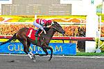 06 February 2010:  Wildcat Fankie with jockey Paco Lopez wins the Eight race at Gulfstream Park in Hallandale Beach, FL.