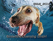 REALISTIC ANIMALS, REALISTISCHE TIERE, ANIMALES REALISTICOS, dogs, paintings+++++SethC_Bella_IMG_0493work3,USLGSC14,#A#, EVERYDAY ,underwater dogs,photos,fotos ,Seth