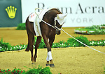 7 October 2010: Switzerland's Luk walks in the ring in between performances during Vaulting in the World Equestrian Games in Lexington, Kentucky