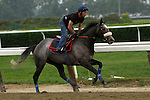 June 4, 2014: Grandeur Manhattan Stakes contender morning works at Belmont. Sue Kawczynski/ESW/CSM