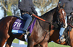 November 03, 2020: Reinvestment Risk, trained by trainer Chad C. Brown, exercises in preparation for the Breeders' Cup Juvenile at Keeneland Racetrack in Lexington, Kentucky on November 3, 2020.