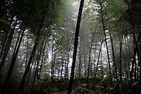 """The bamboo forests of Zhuhai, which literally translates as """"Bamboo Sea."""" This is one of the few areas of bamboo forest in the south that have a moderate amount of protection. Felling still occurs, as the forests do not fall within the 1998 logging ban."""