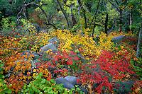 Streamside garden<br /> Oak Creek Canyon<br /> Coconino National Forest<br /> Colorado Plateau,  Arizona
