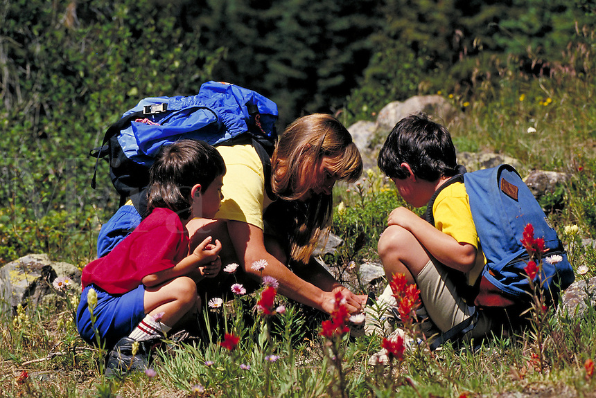 Woman (MR295) & 2 boys (MR449 & 450) hiking & looking at flowers, Summit County, CO. Summit County, Colorado.