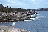 AC24-006z  Rocks and Ocean - with gull, Ocean Drive, Acadia National Park, Maine