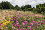 Bully Fen, Nature Reserve and Community Woodland,East London regeneration area for the 2012 Olympic Games, village, park and arena. Hackney Marsh England 2006...