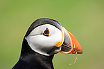 Everyone loves a Puffin!