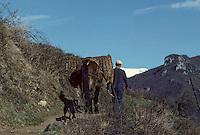 Europe/France/Midi-Pyrénées/09/Ariège/Vallée de Vicdessos/Env Lapège: Vie rurale<br /> PHOTO D'ARCHIVES // ARCHIVAL IMAGES<br /> FRANCE 1980