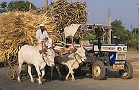 INDIA Mahindra tractor and bullock cart on street in Maharashtra / INDIEN Maharashtra , Ochsenkarren und Mahindra Traktor auf der Strasse