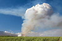Cane fire in the sugar fields is the first step of harvesting cane on Maui, Hawaii.