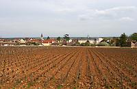 pinot noir vineyard romanee st vivant vosne-romanee cote de nuits burgundy france