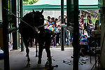 People attend The Hong Kong Jockey Club Tuen Mun Public Riding School Open Day on 18 May 2014, in Hong Kong. Photo by Jerome Favre / Power Sport Images