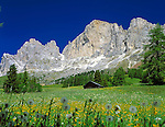 Italy, South Tyrol, Alto Adige, Dolomites, Flower meadow and Cima Catinaccio mountain range (2.981 m)