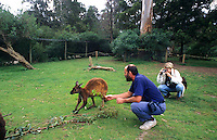 Melbourne Australia. Tourists relating to kangeroos at the Australian Wildlife Park