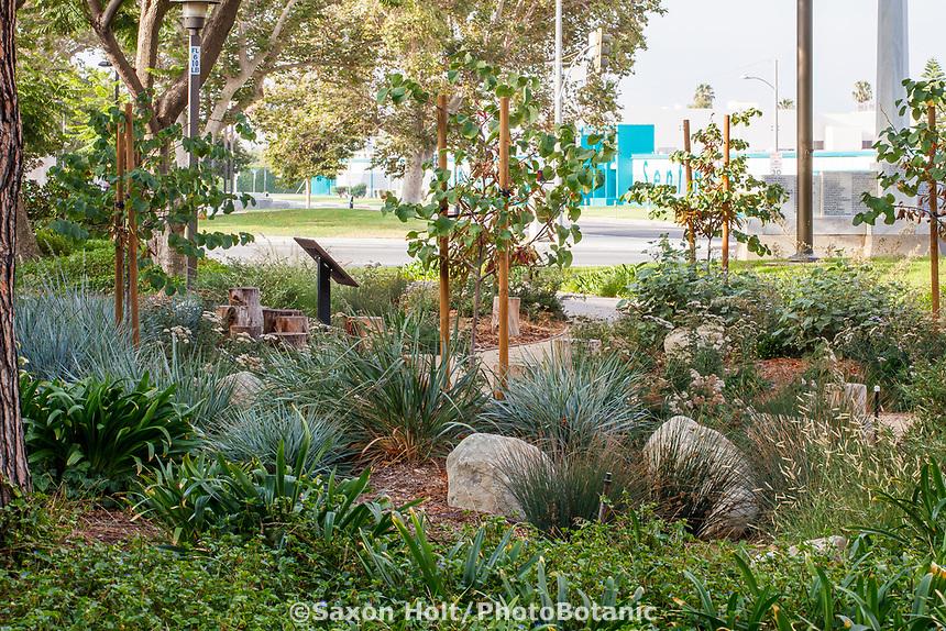 Inglewood City Hall - Water conserving Southern California municipal demonstration garden; design Urban Water Group