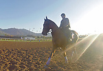 ARCADIA, CA - NOV 03: American Gal, owned by Kaleem Shah, Inc. and trained by Bob Baffert, exercises in preparation for the Breeders' Cup 14 Hands Winery Juvenile Fillies at Santa Anita Park on November 3, 2016 in Arcadia, California. (Photo by Scott Serio/Eclipse Sportswire/Breeders Cup)