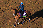 November 3, 2020: Uni, trained by trainer Chad C. Brown, exercises in preparation for the Breeders' Cup Mile at Keeneland Racetrack in Lexington, Kentucky on November 3, 2020. John Voorhees/Eclipse Sportswire/Breeders Cup/CSM