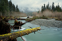 Trees and logs fallen into Sams River, Queets River valley, Olympic National Park, Washington, USA