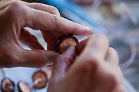 Zirbenzapfen-Kette, Kette aus den zerschnittenen Zapfen einer Zirbe, Zirbenzapfen werden in Scheiben geschnitten, auf einen Faden aufgezogen und zum Trocknen aufgehängt, Zirbenzapfen-Ernte, Ernte, Sammeln von Zirbenzapfen, Zapfen-Ernte, Zirbel-Kiefer, Zirbelkiefer, Zirbel, Zirbe, Arve, Zapfen, Zirbenzapfen, Pinus cembra, Arolla Pine, Swiss pine, Swiss Stone Pine, Austrian stone pine, Stone pine, cone, cones, Le pin cembro, le pin des Alpes, l'arol, l'arole, l'arolle, l'arve, l'auvier, le pin arolle, le tinier