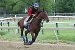 May 15, 2015: Kentucky Derby winner and Preakness contender American Pharoah gallops on the track Friday morning. Friday morning Preakness preparations at Pimlico Race Course in Baltimore, MD. Joan Fairman Kanes/ESW/CSM