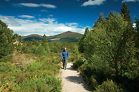 A walker on the Allt Mor path, Glenmore National Nature Reserve, Cairngorm National Park, Badenoch & Speyside