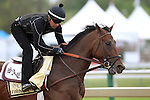 May 15, 2015: Preakness contender Firing Line gallops the day before the big race. Friday morning Preakness preparations at Pimlico Race Course in Baltimore, MD. Joan Fairman Kanes/ESW/CSM
