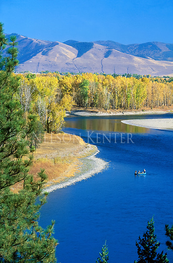 A raft of fishermen on the Clark Fork River with yellow cottonwood trees just west of Missoula, Montana