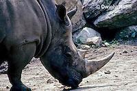 ZM02-001z  Rhinoceros