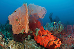 Bright orange sponge and massive gorgonian fan corals in the reef.