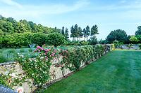 France, Indre-et-Loire, Lémeré, jardins et château du Riveau au printemps, les douves et ses rosiers grimpants