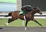 April 03, 2014: Hip 24 Tale of Ekati - Perfect Paula consigned by Wavertree Stables worked 1/8 in 10:1.  Candice Chavez/ESW/CSM