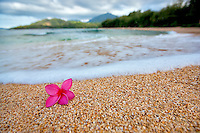 Red plumeria or frangipani on beach. Kauai, Hawaii