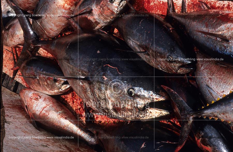 ITALY, Sicily, Egedian island Favignana, La Mattanza, traditional fishing of bluefin Tuna fish, transport of Tuna to the port