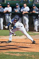 Jackson Raper (14) of the Catawba Indians attempts to lay down a bunt against the Wingate Bulldogs at Newman Park on March 19, 2017 in Salisbury, North Carolina.  The Indians defeated the Bulldogs 12-6.  (Brian Westerholt/Four Seam Images)