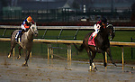 November 28, 2015 Carina Mia (Julien Leparoux) wins the 72nd running of the G2 Golden Rod Stakes, one and one sixteenth miles for two year old fillies, a Kentucky Oaks points race. Owner Three Chimneys Farm LLC (Zuleika B. Torrealba), trainer William I. Mott. By Malibu Moon x Miss Simpatia (Southern Halo.) ©Mary M. Meek/ESW/CSM
