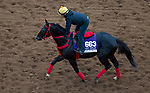 DEL MAR, CA - OCTOBER 30: Sharp Azteca, owned by Gelfenstein Farm and trained by Jorge Navarro, exercises in preparation for the Breeders' Cup Las Vegas Dirt Mile at Del Mar Thoroughbred Club on October 30, 2017 in Del Mar, California. (Photo by Jon Durr/Eclipse Sportswire/Breeders Cup)
