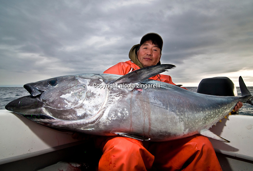 This asian fisherman is almost hiding behind the large Bluefin, such is the size of the fish. They're probably even at weight or maybe the tuna is slightly heavier