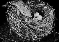 Lizzard Skin, bird nest, and eggs still life