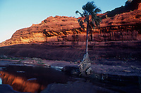 Palm Valley Central Australia