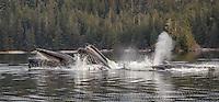 Nakwasina Sound Humpbacks