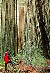 Hiker and redwoods, Redwood National Park, California
