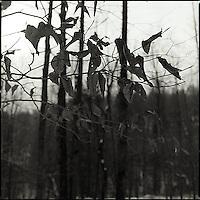 Dried leaves hanging on tree&#xA;<br />