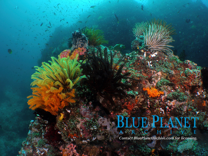 seascape, coral reef, Philippines, Batangas
