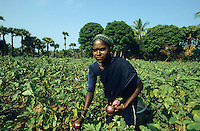 "Südasien Asien Indien IND .Frauen bei Auberginen Ernte -  Landwirtschaft Feldarbeit Aubergine Brinjal Frau ernten xagndaz | .South Asia India Tamil Nadu.women at brinjal harvest vegetables .| [ copyright (c) Joerg Boethling / agenda , Veroeffentlichung nur gegen Honorar und Belegexemplar an / publication only with royalties and copy to:  agenda PG   Rothestr. 66   Germany D-22765 Hamburg   ph. ++49 40 391 907 14   e-mail: boethling@agenda-fototext.de   www.agenda-fototext.de   Bank: Hamburger Sparkasse  BLZ 200 505 50  Kto. 1281 120 178   IBAN: DE96 2005 0550 1281 1201 78   BIC: ""HASPDEHH"" ,  WEITERE MOTIVE ZU DIESEM THEMA SIND VORHANDEN!! MORE PICTURES ON THIS SUBJECT AVAILABLE!! INDIA PHOTO ARCHIVE: http://www.visualindia.net ] [#0,26,121#]"