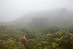 Sur les pentes ouest de la Montagne Pelée (1395 m).arrivée au 3eme refuge dans la brume