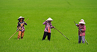 Women in lush green rice fields, Mekong Delta near Bac Lieu, Vietnam.