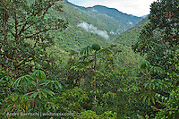 Montane rainforest or cloud forest in Koshnipata Valley, Andean foothills, Manu Biosphere Reserve, Cusco, Peru.