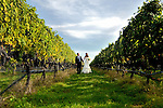 Raphael Vineyard Wedding