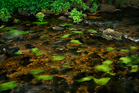 Moss coered stream bed. Teign River Dartmoor National Park, England
